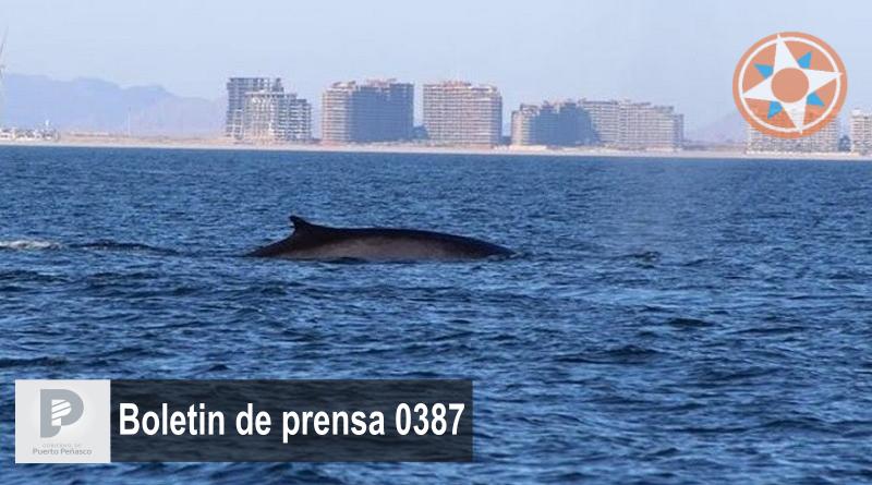 Puerto Peñasco única área de Sonora para observación de ballenas